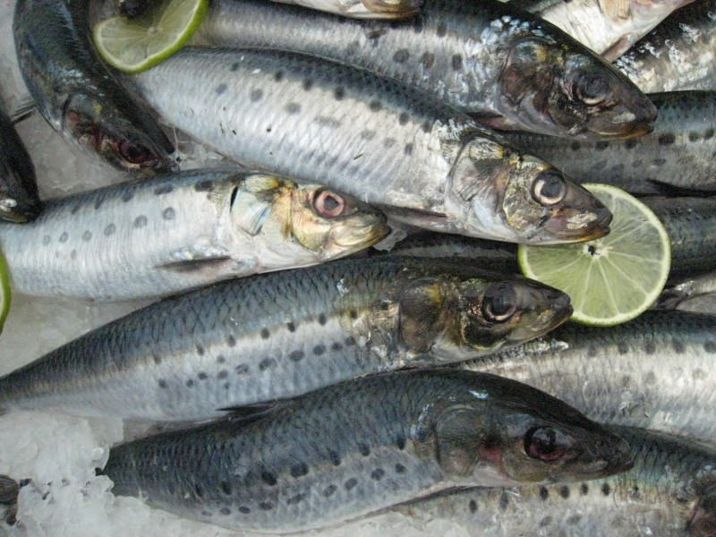 Sardines are low on the food chain and healthy too!