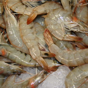 Sustainable Seafood in the Classroom — Sierra Club BC