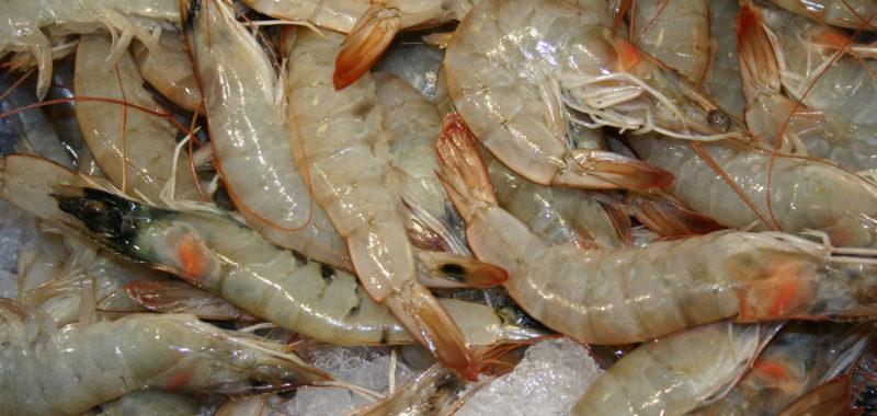 Farmed tropical shrimp - SeaChoice